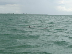 Three of our dolphin friends
