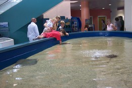 Patch almost had to get in the water to pet the stingray